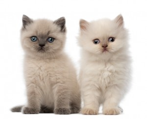 two-kittens